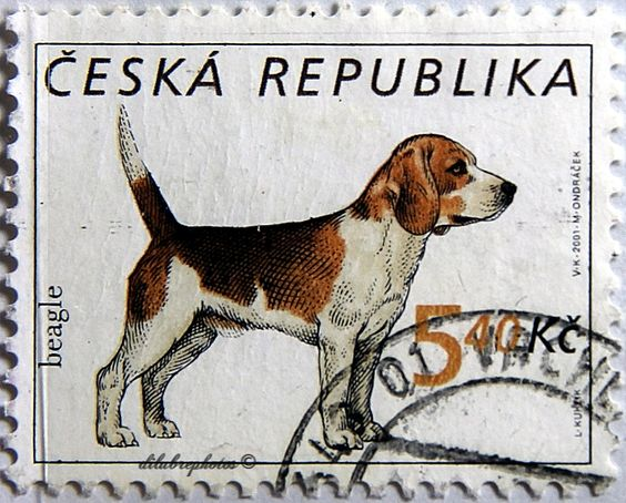 Ceska.  DOGS. BEAGLE.  Scott 3150b A1197, Issued 2001 June 20, Photo & Enge., Perf. 11 1/2 x 11 1/4, 5.40. /ldb.