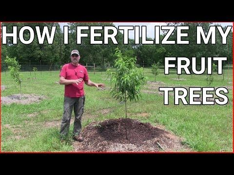 How And When To Fertilizing Fruit Trees Youtube Fruit Trees Fertilizing Fruit Trees Fertilizing Trees