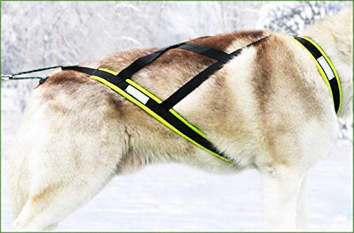 On Sale Now Northern Howl Weight Pulling Dog Harness X Back For