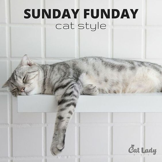Whoa, whoa, whoa... Don't be too crazy!  #sundayfunday #catlife #shelflife