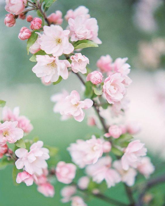 "andantegrazioso: ""Hello Spring | oliverflyphotography """