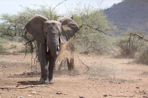 Serengeti, Tanzania! #Afrika #Wildlife