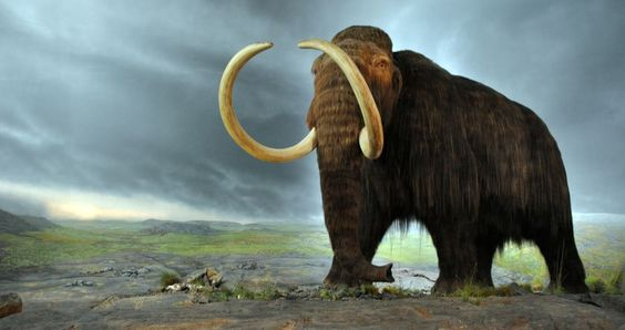 The ancient elephant, found under a soy field, may have been killed by humans about 10,000 years ago.