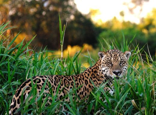 10 Hidden Places The World Doesn T Know About Pantanal Animals Big Cats