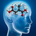Descubren más detalles de cómo funciona nuestra arquitectura cerebral