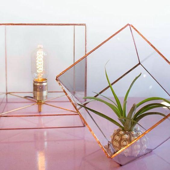 Back in stock! @hartruyt glass cubes #terrarium #lamp #glass #copper #handmade #amsterdam #thuyskamer #nieuwenieuwstraat #shop #localdesign #winkel #amsterdamcentrum #luchtplantje #tillandsia #airplant #seaurchin #handgemaakt #kubus #kooldraadlamp #glas #koper #decoration #interior by thuyskamer