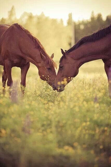 Two of my favs! Horses and wildflower feilds