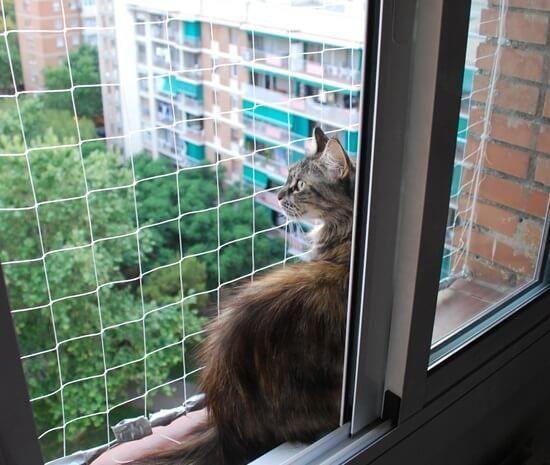 Redes De Seguridad Para Gatos Transparentes Certificadas Seguridad Para Ventanas Protecciones Para Ventanas Gatos