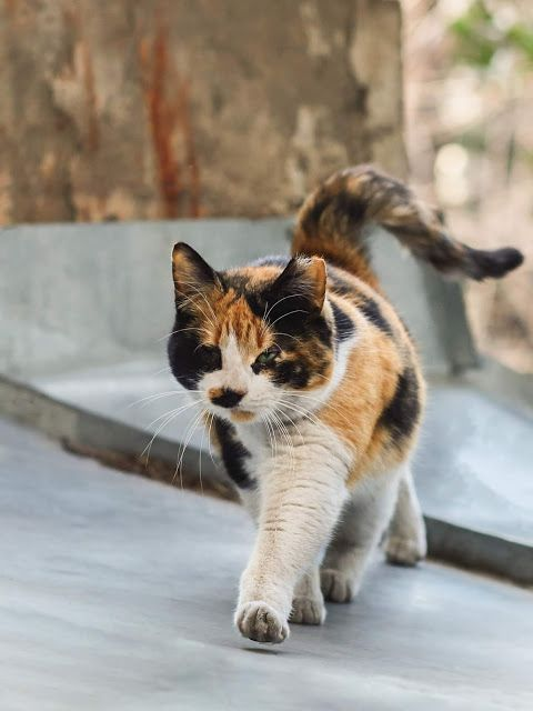 11 Pics Walking With Borther Cute Cats And Kittens Cute Cats Kittens Cutest