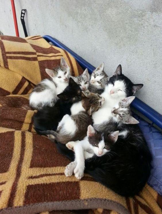 20 gatos que sabem tudo sobre a parentalidade