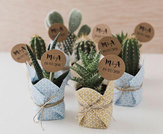 Preciosos mini cactus, que no necesitarán mucho cuidado por tu parte ;) #bodas #Antequera #Jardinesdelcortijuelo #invitados #regalos #cactus #plantas #ideas #boda