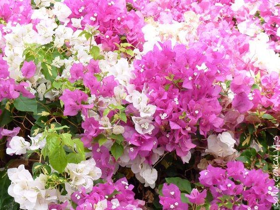 flores #7