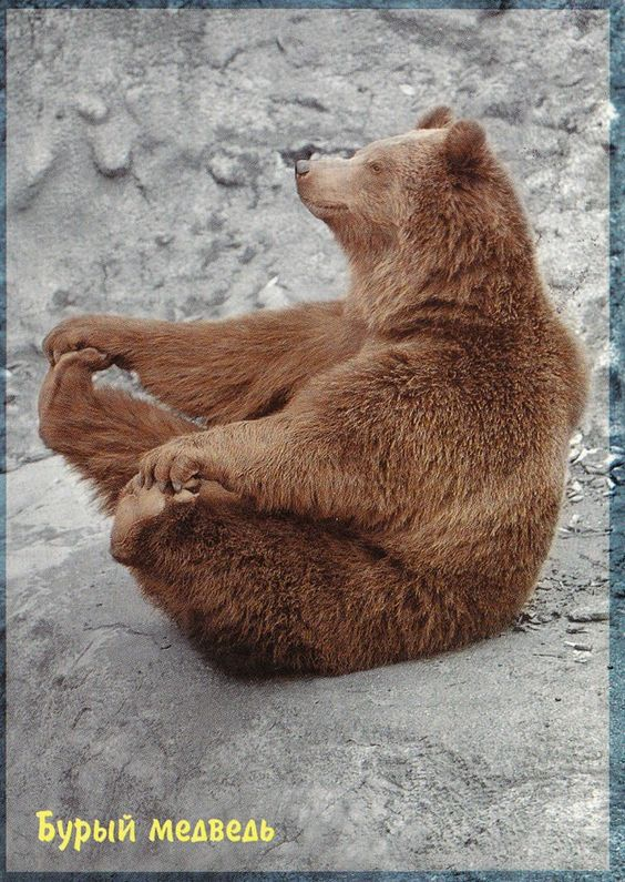 bear!: Baby Pose, Happy Baby, Funny Animal, Adorable Animal
