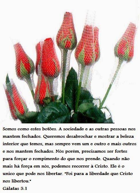 Cleidemir Gonçalves: Somos como estas flores...