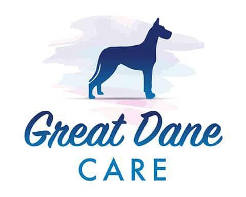 11 Ways To Socialize A Great Dane 2020 Great Dane Great Dane