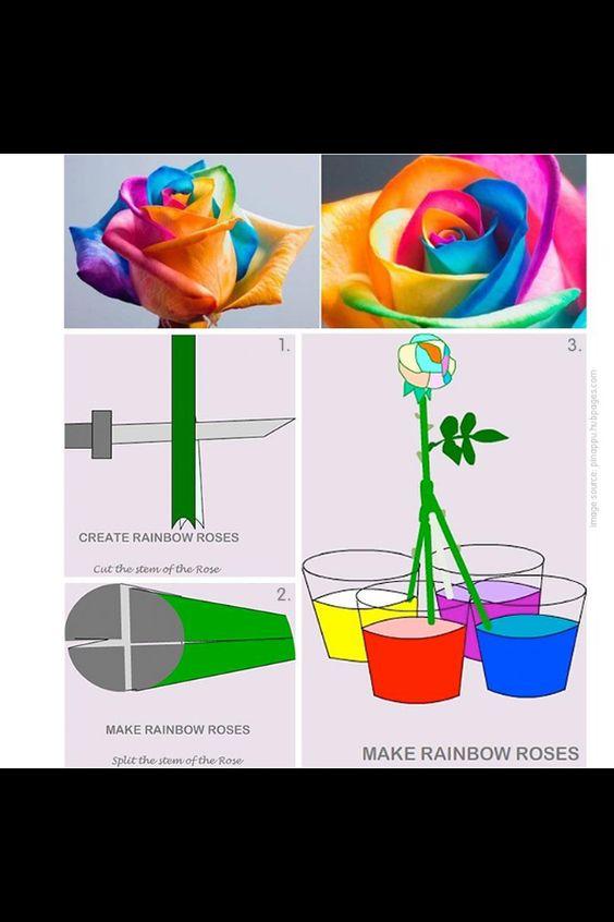 DIY bunte Rosen