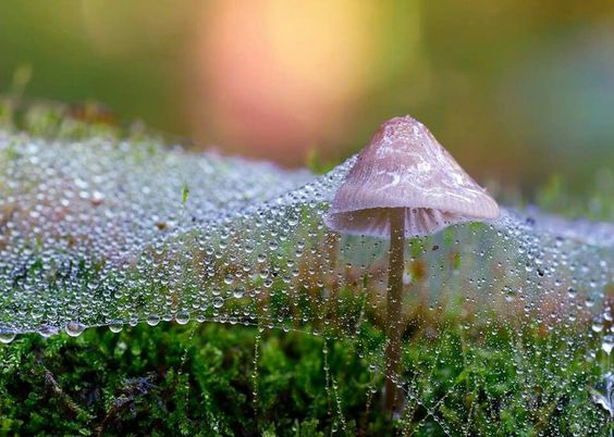 Mushroom covered in spider web and dew