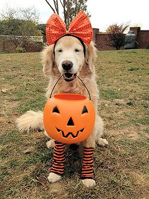 Your Pets in Halloween Costumes!
