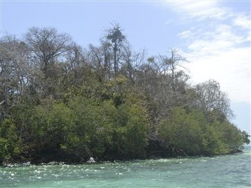 PULAU BURUNG - www.bratahungan.com