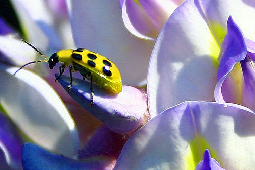 wisteria spotted visitor by jaki good miller, via Flickr