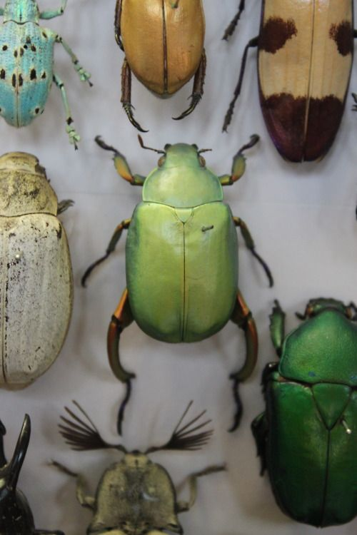 'Beetle green', Oxford Natural History Museum, Canon EOS 500D, © Rebecca Siebenthal