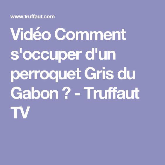 Vidéo Comment s'occuper d'un perroquet Gris du Gabon ? - Truffaut TV