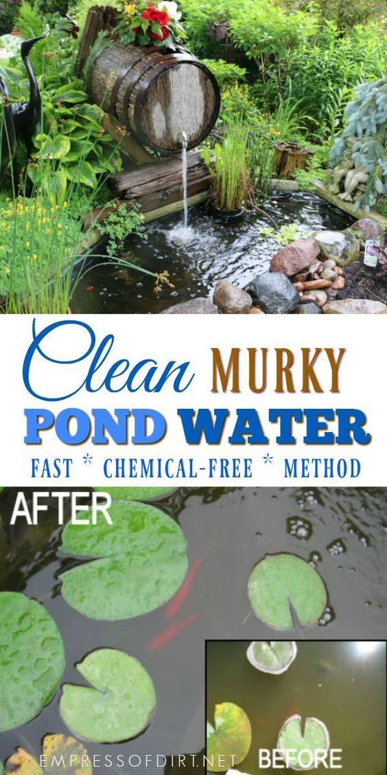 A simple way to clean murky pond water within hours without chemicals. #gardening #gardenpond #ponds #backyardpond #gardentip #empressofdirt