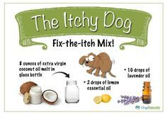 """Make this """"Fix-The-Itch-Mix"""" right at home and help restore your dog's healthy pH levels and discourage yeast.  Once a week, or more if needed, massage yeasty areas with a coconut oil mixture: 1. Let extra virgin coconut oil melt in a small glass bottle – about 8 ounces of it. 2. Add 10 drops of lavender oil 3. Add 2 drops of lemon essential oil. Shake to mix. 4. Store it in a dark place.This coconut oil mix will last all summer."""