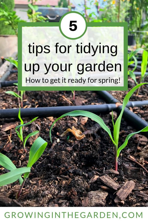 A tidy garden is just as important as a tidy house. These tips will help clean up your garden space and get it ready for spring.