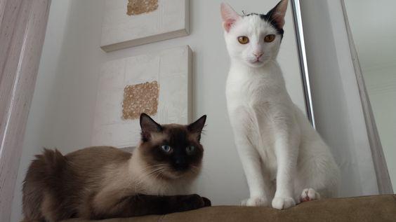 Tobias e Frifa Kalo