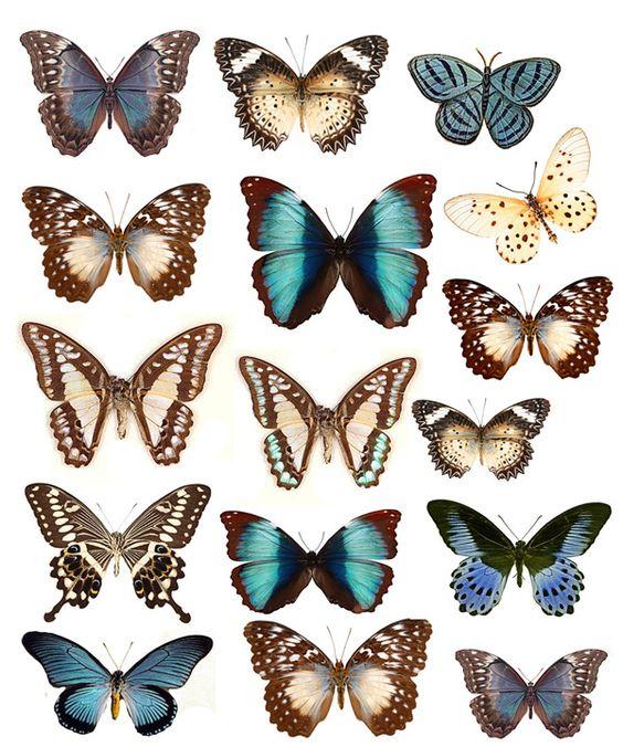 j'espère que je ne vais pas vous donner une indigestion de papillons ... si celà peut vous servir dans vos créa , voici quelques planches anciennes de toutes sortes de Ces petites bêtes si jolies ; j'ai déjà quelques idées mais encore en cocon ...