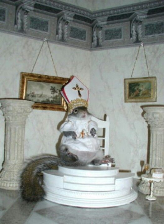 Squirrel pope