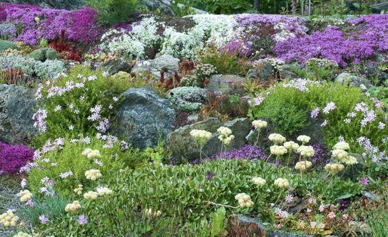 torktåligaperenner som mår bra på den här typen av växtplats ärbergnejlika, Dianthus gratianopolitanus, broklewisia,Lewisia cotyledon, och purpurbräcka, Saxifragaoppositifolia.