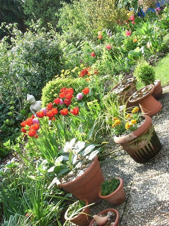 mila blau mein Garten im Frühling Tulpen Easter