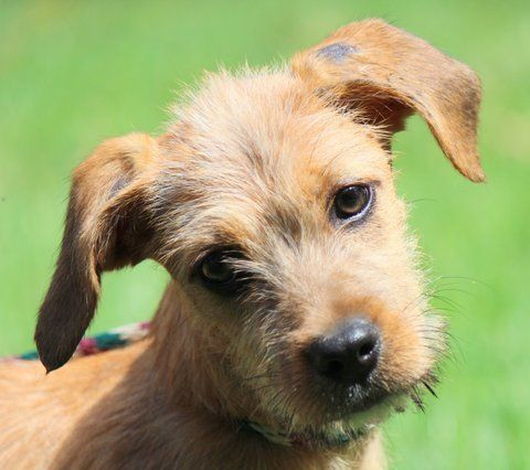 Adopt Waggles On Terrier Mix Dogs Animal Rescue Dogs