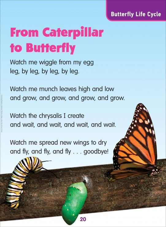 From Caterpillar to Butterfly (Butterfly Life Cycle ...