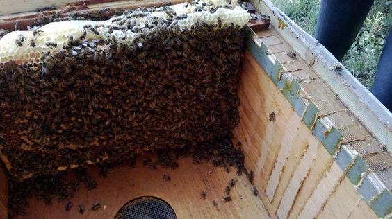 nu nog in de oude bijenkast