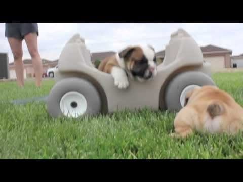 @Todd Tanner.  I thought, i've got to stop sending you cute animal videos, but this was too good!
