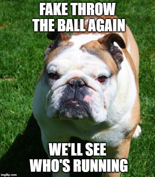 Don T You Try Fake Throwing The Ball And Angering The Bulldog Funnybulldog Bulldogmeme Bulldog Funny English Bulldog Funny French Bulldog Funny
