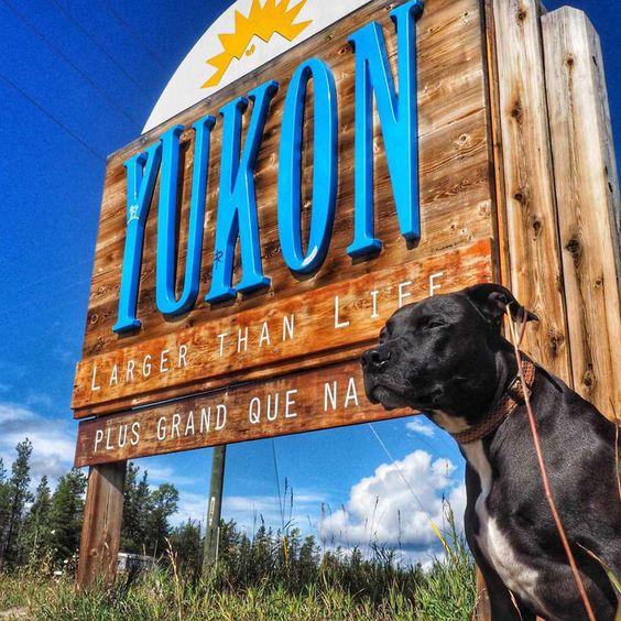 Na natureza selvagem: conheça o homem que foi para o Alasca num jipe com seu cachorro