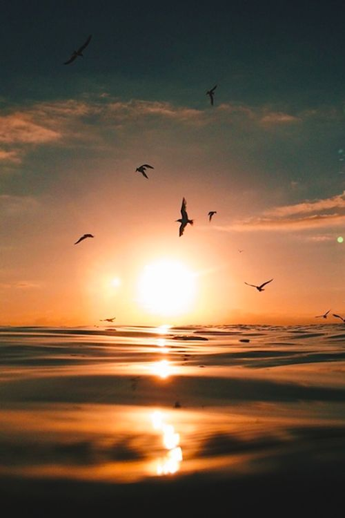 Birds, Sun and Water by Ryan Pernofski