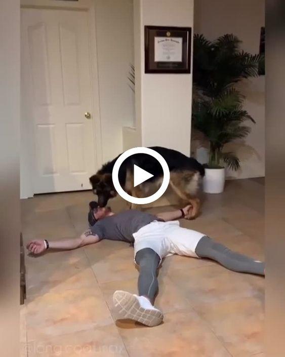 o homem fingi desmaia e o cachorro da carinho pra ele e vai buscar a bolinha