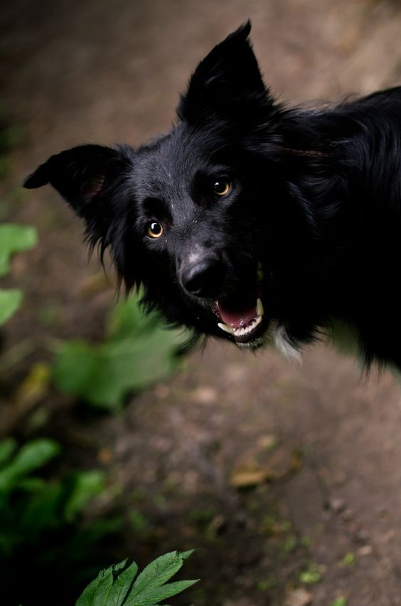 For National Black Dog Day Lets All Consider Black Dogs And Make