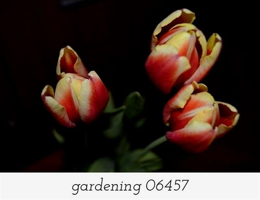 Garden The Organic Way With These Great Tips Outdoor Flowers Garden Ideas