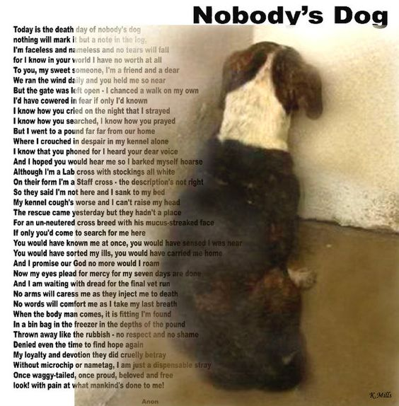 """... dogs as """"pits"""". And man, this poem is so true. :// """"Nobody's dog: https://www.pinterest.com/pin/114419646756468898/"""