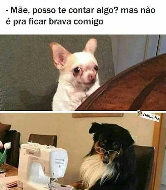 Coletanea De 30 Memes Brasileiros Engracados Whatsapp E Facebook Da Semana Mijarderirtv Animal Crossing Memes Funny Memes Dog Memes