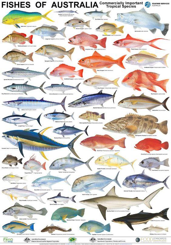 Australian fish poster fisherman tackle pinterest for List of fish names
