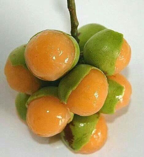 mamones fruit Gallery