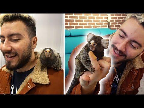 Enes Batur Youtube Youtube Maymunlar