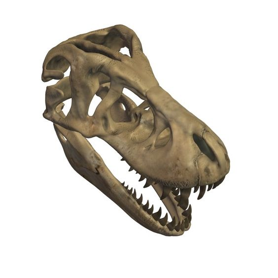 making a fossil skull | Tyrannosaurus Rex Skull Fossil made with MeshMixer